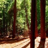 Walk in the woods 9.6.15