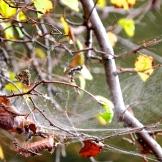 Spider webs catching light. 9.6.15