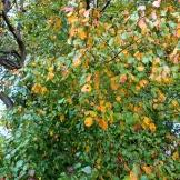 Beginnings of fall 9.15