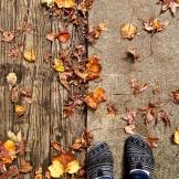 Exploring the beginnings of fall 9.15